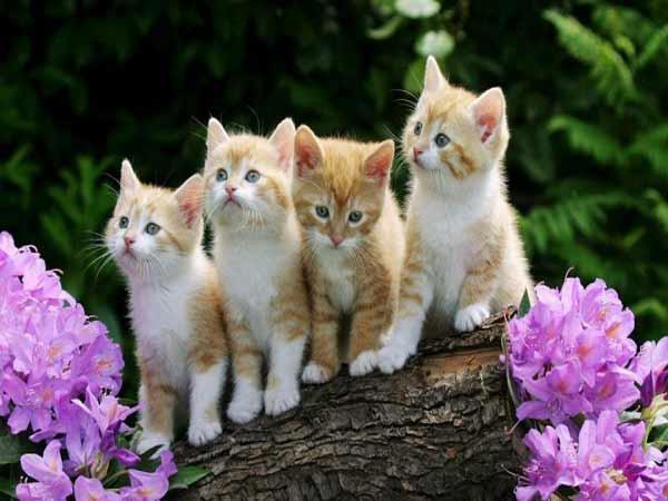 Mèo vào nhà là điềm báo lành hay dữ?