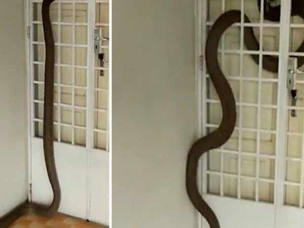 Giải mã bí ẩn rắn bò vào nhà