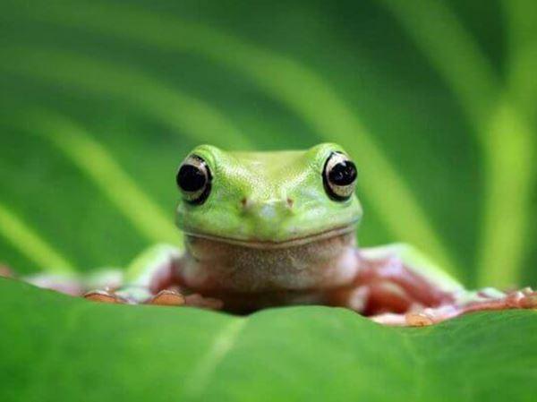 Mơ thấy ếch đánh ngay cặp số may mắn nào, là điềm báo gì?